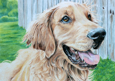 DOG PORTRAIT IN COLORED PENCILS